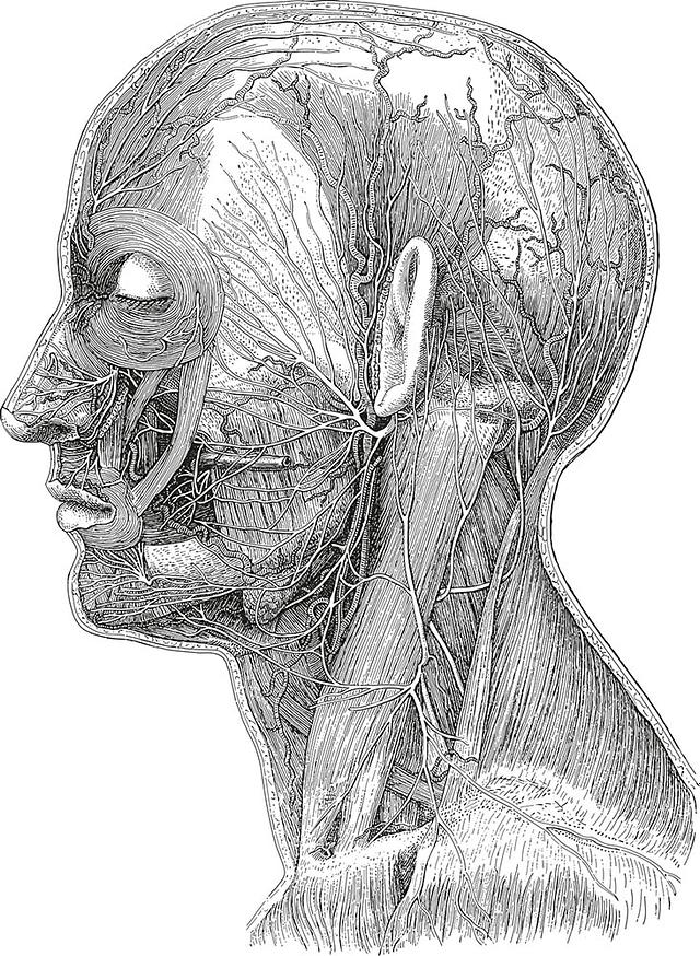 Session de dissections au laboratoire d'anatomie de la faculté de Lyon. Mise en évidence des obstacles anatomiques en implantologie dentaire.